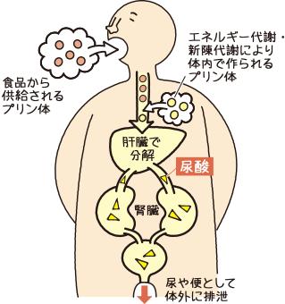 と は 値 尿酸